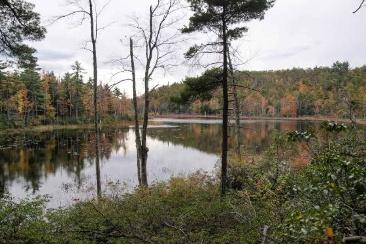 Hoar Pond at Nussdorfer Nature Area
