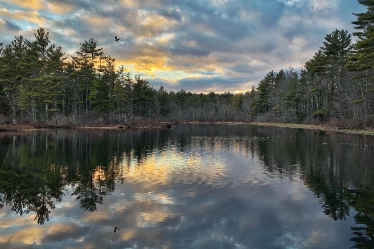 Waterloom Pond