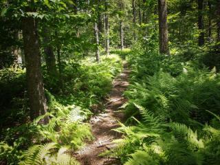 Nutting Ledges Trail Off Wapack Trail